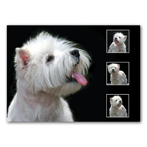 Dog Composite 4 View - Sold in pack (100 postcards)