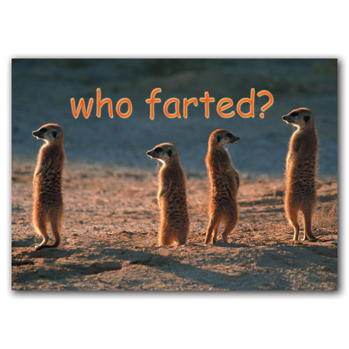 Animal Humour Who Farted - Sold in pack (100 postcards)