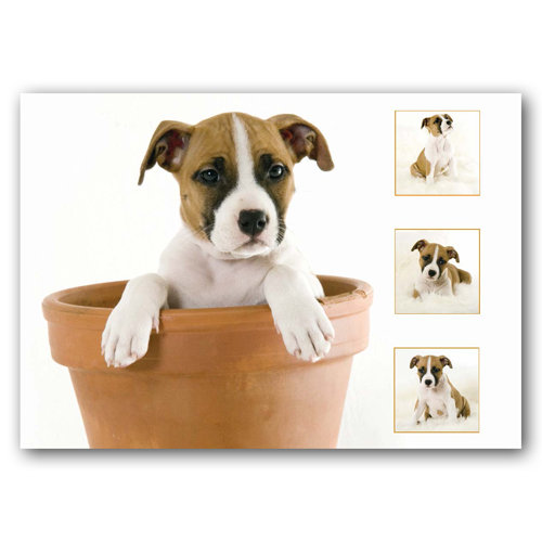Dog Composite - Sold in pack (100 postcards)