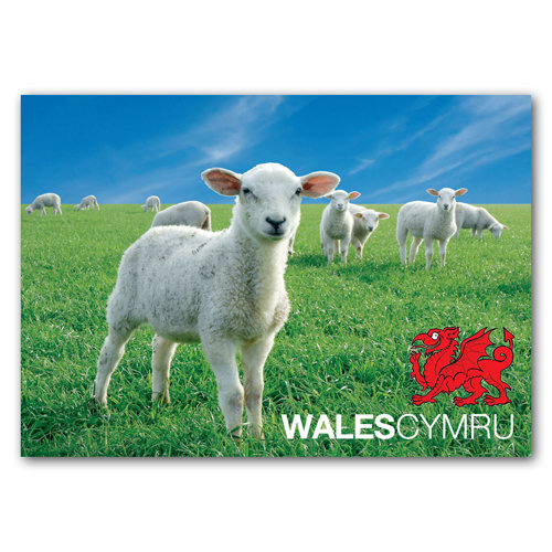 Wales Sheep & Red Dragon - Sold in pack (100 postcards)