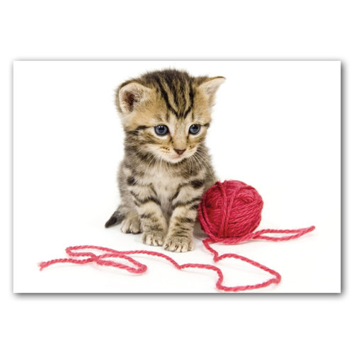 Cat and Wool - Sold in pack (100 postcards)