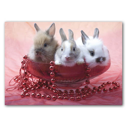 Bunnies - Sold in pack (100 postcards)