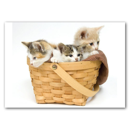 Kittens Basket - Sold in pack (100 postcards)