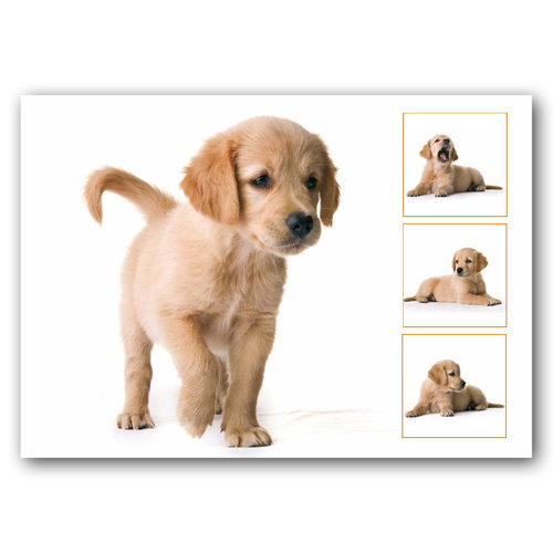 Dog Puppy Composite - Sold in pack (100 postcards)