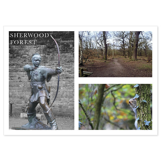 Sherwood Forest - Sold in pack (100 postcards)
