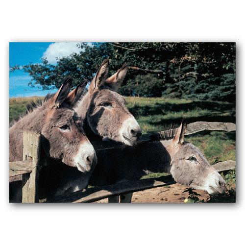 Donkeys - Sold in pack (100 postcards)