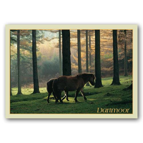 Dartmoor - Sold in pack (100 postcards)