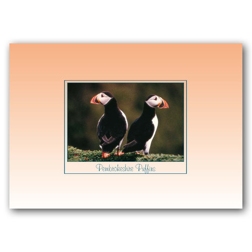 Pembroke Puffins - Sold in pack (100 postcards)