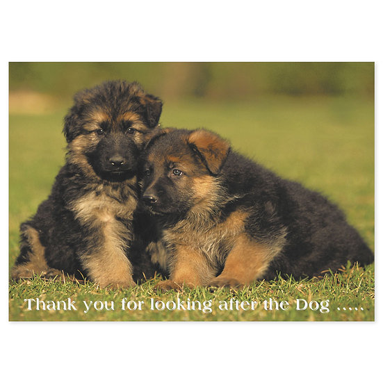 Thank You - Dog - Sold in pack (100 postcards)