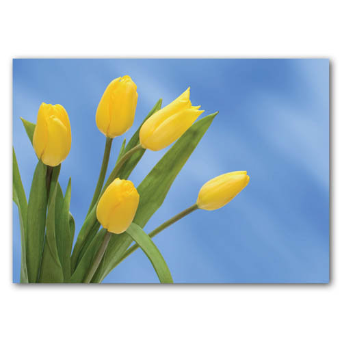 Floral Range Tulips - Sold in pack (100 postcards)