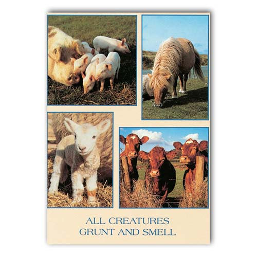 Animal Humour All Creatures - Sold in pack (100 postcards)