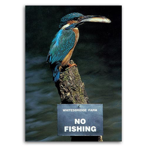 Animal Humour - No Fishing / Kingfisher - Sold in pack (100 postcards)
