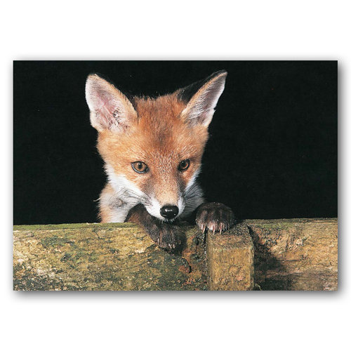 Fox Cub - Sold in pack (100 postcards)