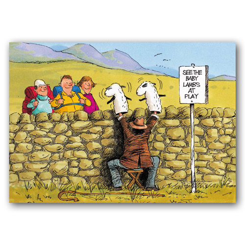 Yorkshire Humour Lambs - Sold in pack (100 postcards)