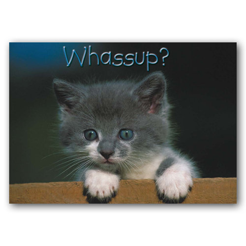 Animal Humour Whassup? - Sold in pack (100 postcards)