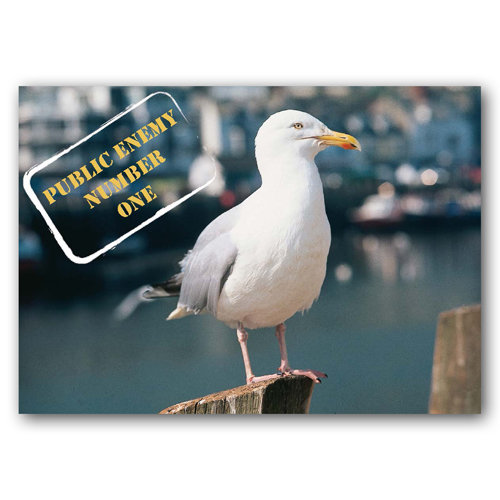 Animal Humour - Public Enemy Number One - Sold in pack (100 postcards)