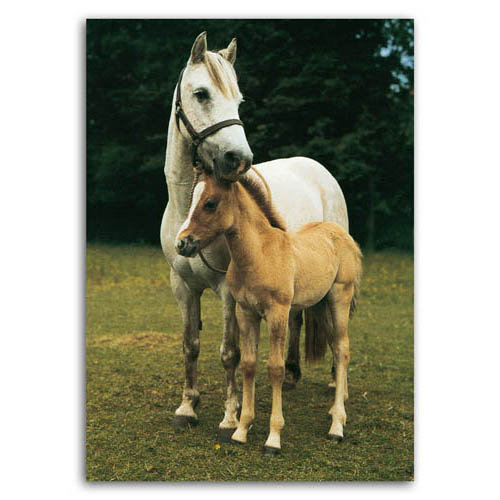 Mare & Foal - Sold in pack (100 postcards)