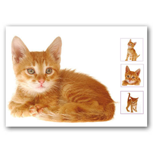 Cat Composite - Sold in pack (100 postcards)