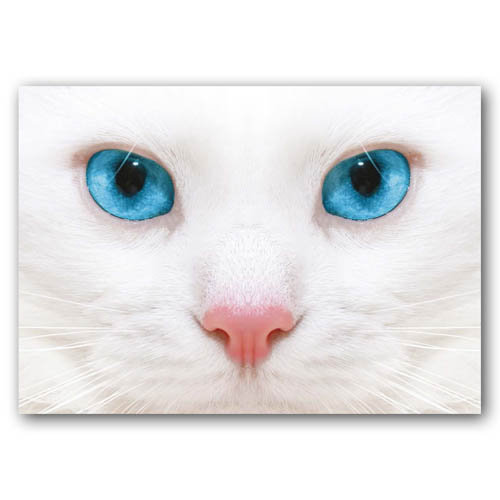 Cat Bright Eyes - Sold in pack (100 postcards)