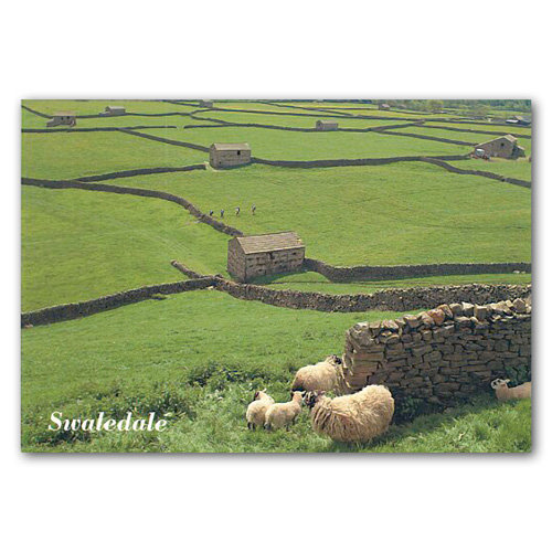 Swaledale - Sold in pack (100 postcards)