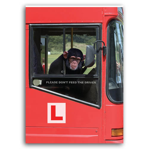 Animal Humour - Learner Driver - Sold in pack (100 postcards)