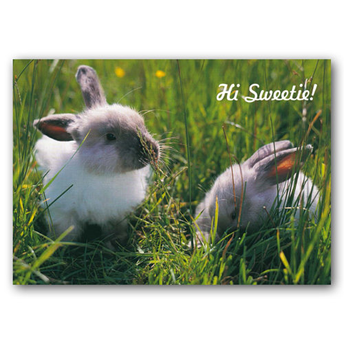 Animal Humour Hi Sweetie - Sold in pack (100 postcards)