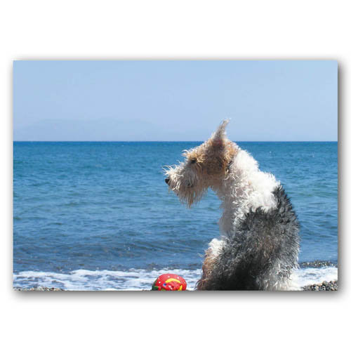 Seaside Pals  - Sold in pack (100 postcards)