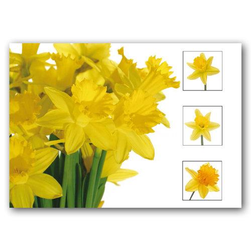 Floral Range Composite - Sold in pack (100 postcards)