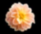 zzacht-bloem.png