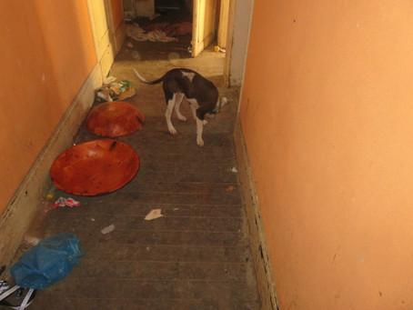 Ils survivaient dans un squat à Pantin. La Fondation a pris en charge les 2 chiens et déposé plainte