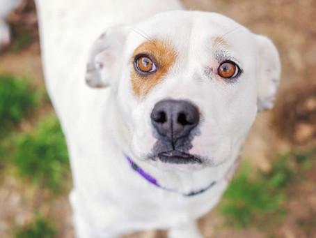 Les chiens sentent-ils vraiment quand on a peur ?