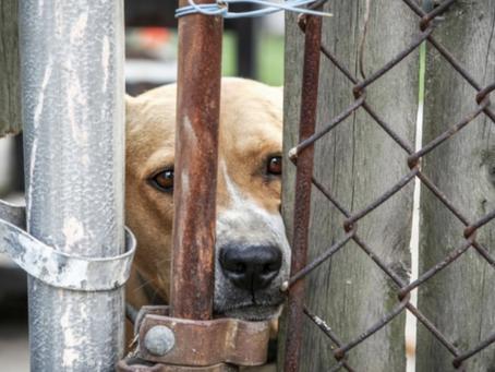 La propriétaire d'une pension pour animaux a été condamnée.