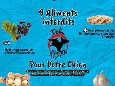 Affiche des aliments dangereux pour les chiens