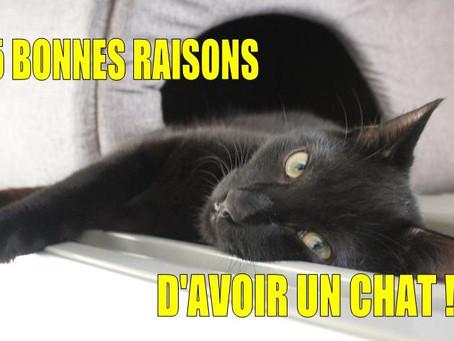 5 BONNES RAISONS D'AVOIR UN CHAT !