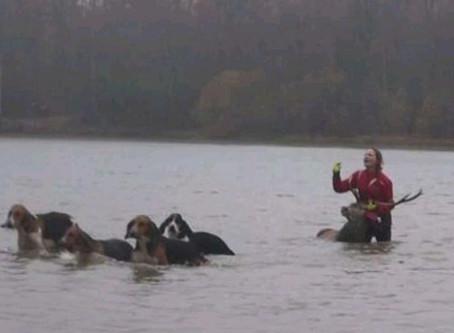 Chasse à courre : une femme qui tentait de sauver un cerf piégé dans un étang, prise à partie
