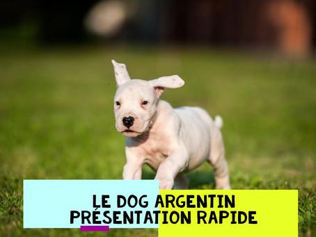 Présentation rapide du Dog ARGENTIN !