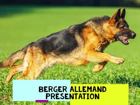Présentation rapide du Berger Allemand !