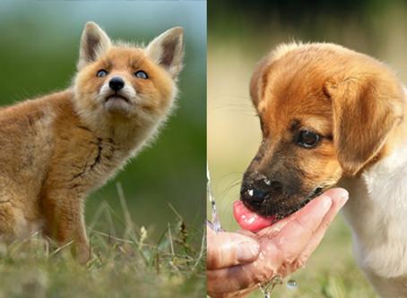 Que faire lorsqu'on trouve un animal errant blessé ?