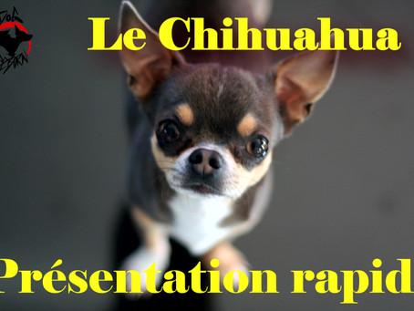 Présentation Rapide du CHIHUAHUA.