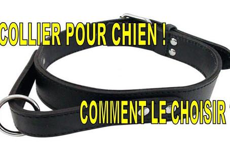 COLLIER POUR CHIEN ! COMMENT LE CHOISIR ?