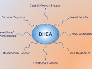 The Role of DHEA in Adrenal Fatigue & Loss of Libido