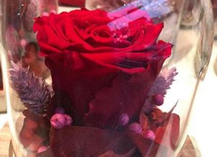 Globe rose éternelle rouge