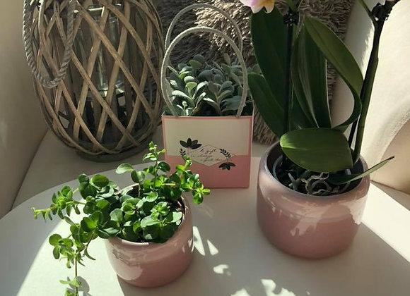 Petite orchidée avec cache-pot