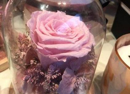 Globe rose éternelle rose
