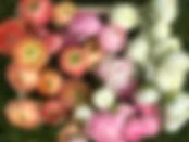 3F3BD6DF-FBEC-49CD-AB73-8C9071B950DE.jpe