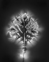 02a. Bodies of Light.jpg