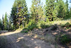 20 acres bordering National Forest