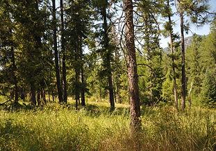 10.6 Acres Near Trout Creek