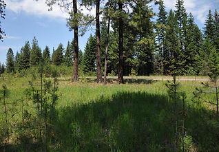 2.14 Acres on Cherry Creek
