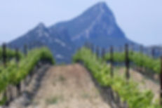 Grape Opportunities Wine UK Wine Supplier, Mas Peyrolle Wine, Wolf Mountain